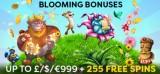 Blooming Bonuses At Fruity King Casino